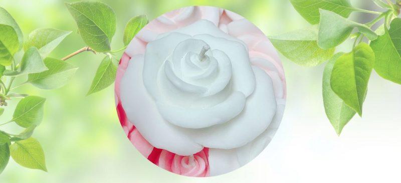 bougie naturelle en forme de rose blanche